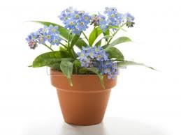 Home Ideas For > Flower Pots With Flowers