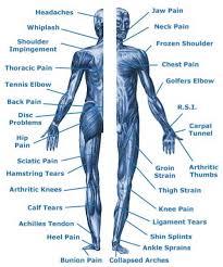 Body Injury Chart Full Body Diagram Catalogue Of Schemas