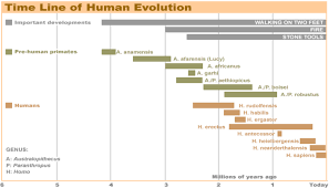 Homosapiens Time Line Yahoo Image Search Results Human