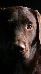 Black Dog 4K 5K HD Wallpapers