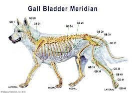 Acu Dog A Guide To Canine Acupressure Acupressure