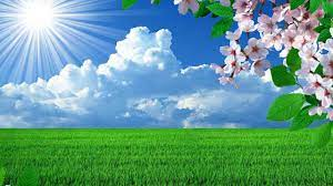 Nature Flower Background Hd ...