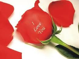i love u rose