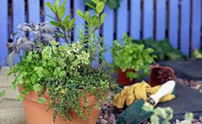 basics of gardening for beginners. herb garden at home basics of gardening for beginners