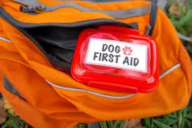 mini diy dog first aid kit for hiking