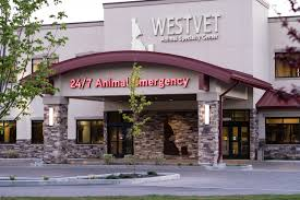 westvet 24 7 animal er