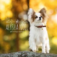 Alysha Noel Photography - Home   Facebook