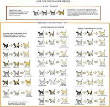 Cat Color Chart Amber Russet Colour Change Chart Cat Colors Cats