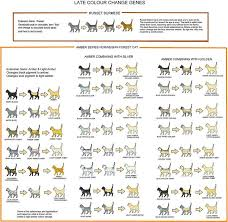Amber Russet Colour Change Chart Cat Colors Cats