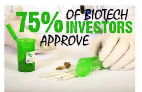 of medical cannabis essay legalization of medical cannabis essay