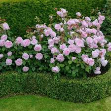 Small Picture 806 best Garden border ideas images on Pinterest Flowers