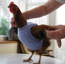 Chicken Sweater Pattern Beauteous You Will Love These Knitted Chicken Sweaters Free Patterns Jumper
