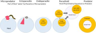 They may live as ectoparasites on the surface of the host (e.g. Host Biology Wikipedia