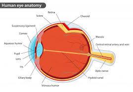 human eye diagram glastonbury