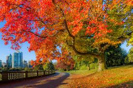 Fall Leaf Chart Canada Fall Foliage Reports