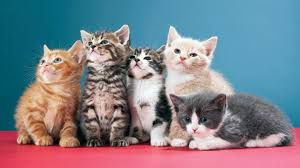 cats and kittens pictures. Plain Kittens Kittens And Cats Kittens Pictures