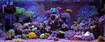 Saltwater Aquarium Lighting Guide Read Our Complete Buyers Guide For Reef Aquarium Lighting