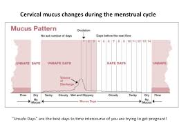Cervical Fluid Chart Using Cervical Mucus Charting To Tell The Best Time To Get
