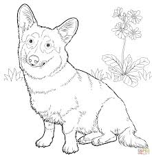 Small Picture New Corgi Coloring Pages 41 On Free Coloring Kids With Corgi