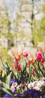 Spring iPhone Wallpapers - Top Free ...
