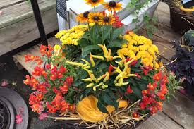 Container Gardens For Winter  Home Outdoor DecorationContainer Garden Ideas For Fall