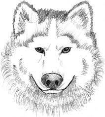 Small Picture Realistic Wolf Coloring Pages Free Printable Wolf Coloring Pages