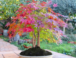 best trees for small gardens squires