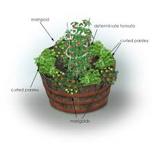 Container Gardening Ideas For Limited Space  HomesCornerComContainer Garden Plans Tomatoes