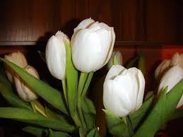 """Résultat de recherche d'images pour """"flori albe de mai"""""""