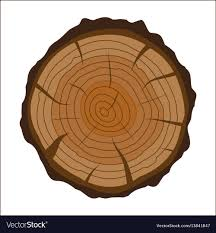 Cross section of tree stump or trunk wood cut vector image