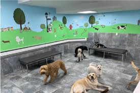 Speck's playhouse, south park doggie playland dtla, citydog! Dog Daycare In Chelsea And West Village Nyc City Tails Nyc