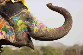 Free Elephant Wallpaper for Android ...