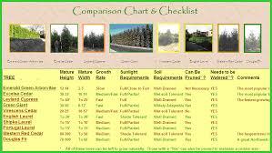 emerald chart emerald green arborvitae