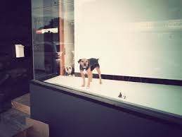 dogs barking at people and dogs through window