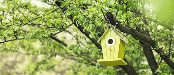 painting a bird box bird spot