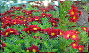 Imagini pentru flori fermecatoare