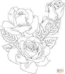 Roses Coloring Pages Free Coloring Pages