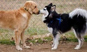Consejos para el cuidado especial de una perra en celo