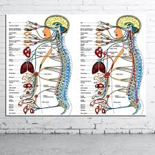 Human Organ Chart Human Organs Medical Anatomical Chart Canvas Poster