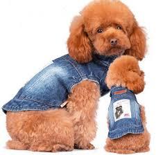 """Résultat de recherche d'images pour """"manteau chien fashion"""""""
