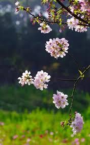Сочинения на тему Весна более штук  Цветочки на дереве Весна