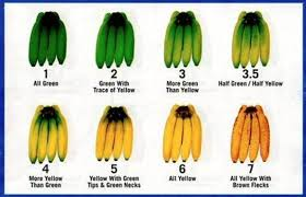 Banana Ripeness Chart The 8 Ripening Stages Of Bananas From Unripe 1 To Ripe 7