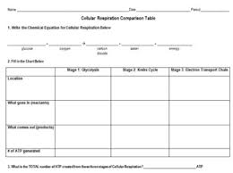 Complete The Chart For The Stages Of Cellular Respiration Cellular Respiration Comparison Table