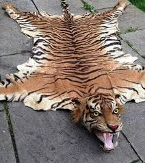 an expert examined the rugs and thought both of the tigers were killed after 1947