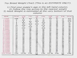 30 Luxury English Bulldog Puppy Weight Chart Chihuahua