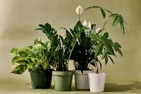 Interior Design Plants Inside House The 9 Best Indoor Plants For Every Kind Of Person Gear Patrol