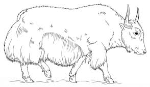 Small Picture Walking Yak coloring page Free Printable Coloring Pages