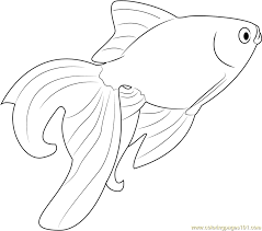 Small Picture Beautiful Goldfish Coloring Page Free Other Fish Coloring Pages