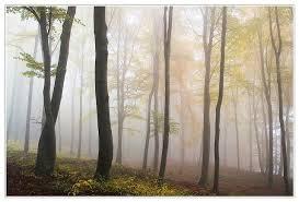 Taiga Temperature Chart Taiga Boreal Forest Biome Temperature Climate Location