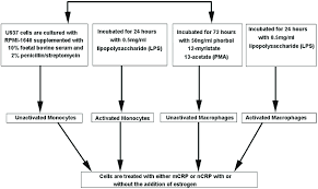 Flow Chart Of Different Treatment Paths Used To Activate And